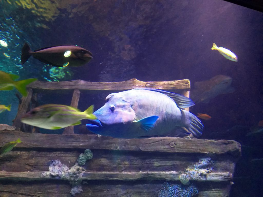 Sea Life Malaysia, an Up-Close Ocean Experience, Trough Magical Storytelling, Interactive Displays and Hands-on Encounters